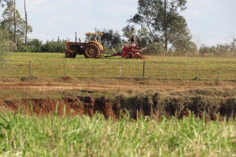 Replantio de aveia em sete hectares na propriedade de Rudinei Perlin Coppetti, em Olhos D'Água