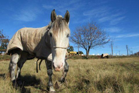 cavalo também sente frio (Copy)
