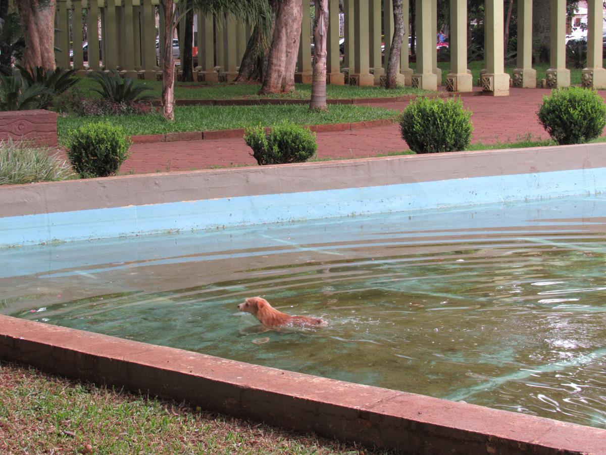 Banho de cachorro 02