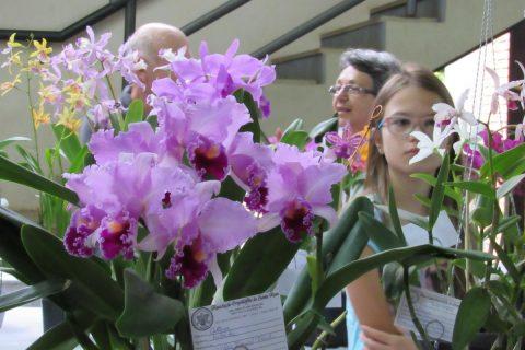 Durante o evento haverá o tradicional concurso de orquídeas