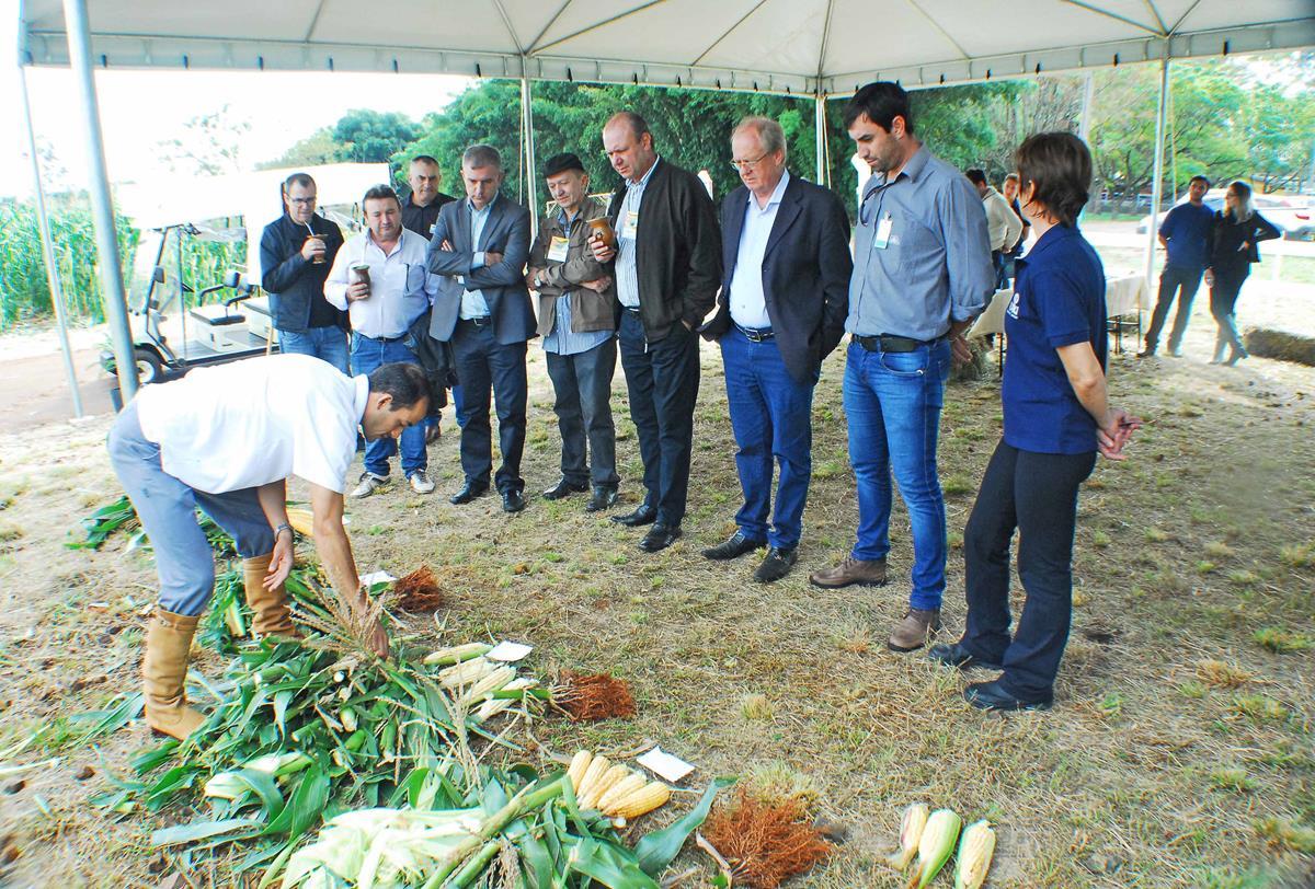 Área Demonstrativa do Milho apresentou alternativas e diferentes tecnologias para a produção da cultura