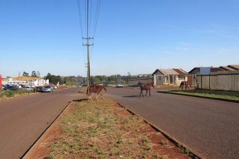 Cavalos na pista (1) (Copy)