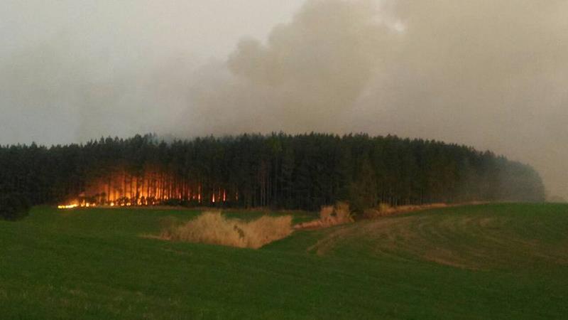 Incêndio atingiu uma área de Eucaliptos que fica às margens da BR 285, na última semana - Foto: Divulgação / Facebook Caçadores de Notícias
