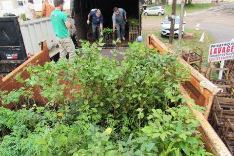 Plante árvores nobres - mudas nativas arfom (18)