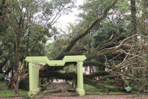 Jacarandá Mimoso com tronco doente cai com o vendaval e destroi pelo menos tres pérgolas que representam os trinta Povos Missioneiros na Praça Pinheiro Machado