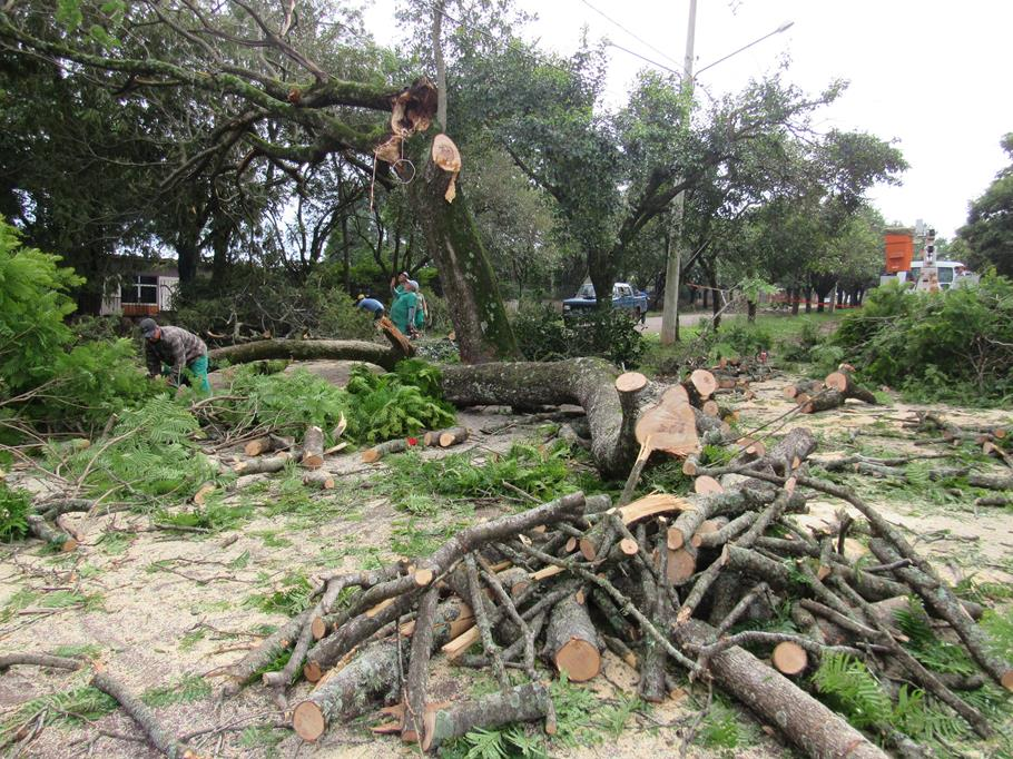 Servidores da Secretaria do Meio Ambiente cortam uma árvore tombada na Av. São João, Bairro Sobuski
