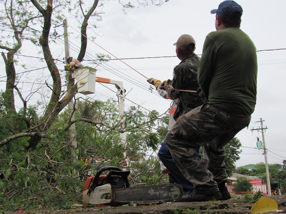 Queda de árvore na Av. São João pos temporal vendaval (7)