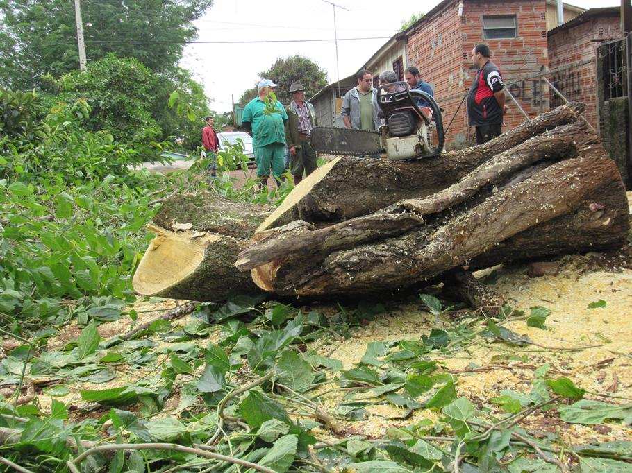 Limpeza da Rua Três de outubro depois da retirada de árvores no canteiro central e na Praça Pinheiro Machado