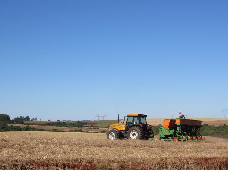 Produtor planta às margens da estrada de acesso a Buriti