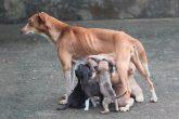 castracao-caes-gatos-abrigo-piccolina-quem-ama-cuida