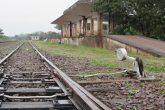 Terminal Ferroviário (18)