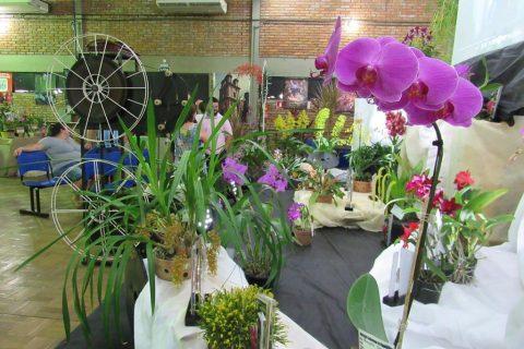 Exposição de Orquídea (2)
