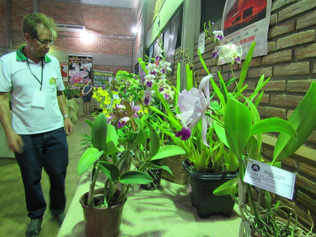 Exposição de Orquídea (4)