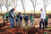 Plantio de Arvores Tunel Verde