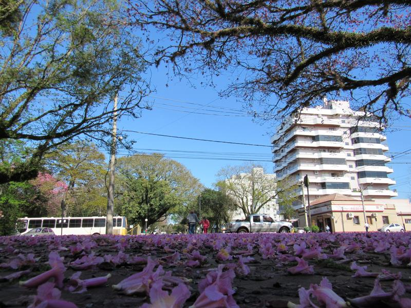 Primavera (1) (Copy) (Copy)