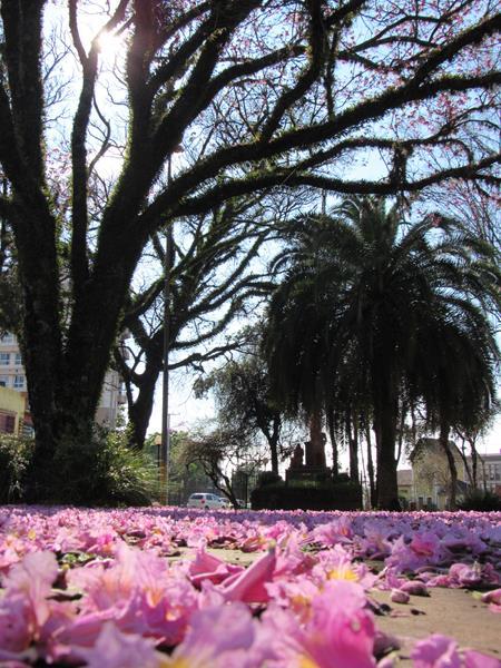 Primavera (4) (Copy) (Copy)