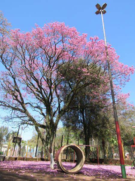 Primavera (6) (Copy) (Copy)
