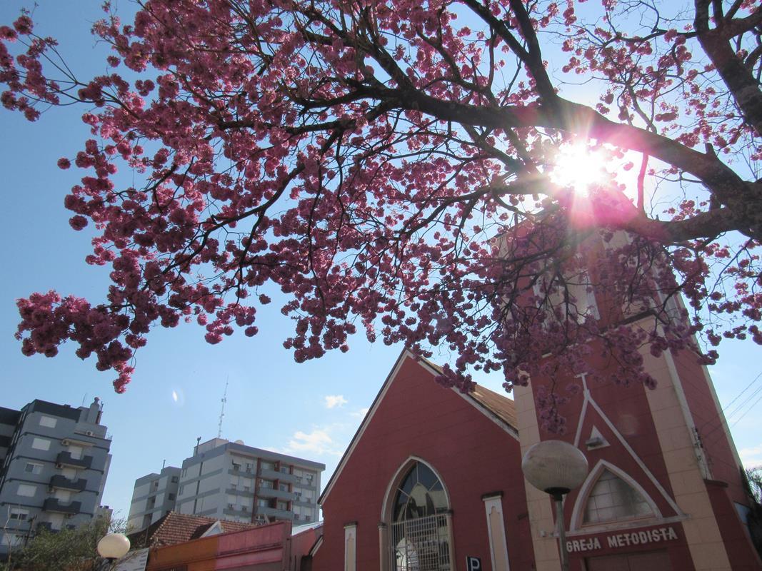 Igreja Metodista de Santo Ângelo - Ipê Roxo da tres de outubro (37) (Copy)