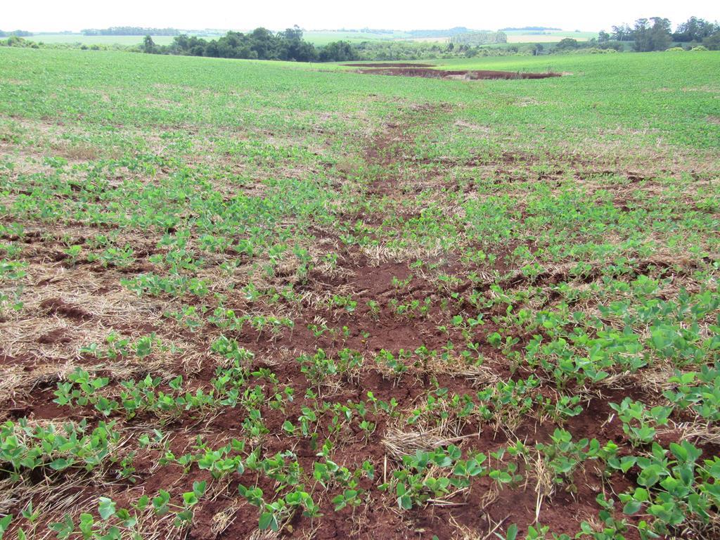 Compactação e adensamento de áreas agrícolas em Santo Ângelo (7) - água doce (Copy)
