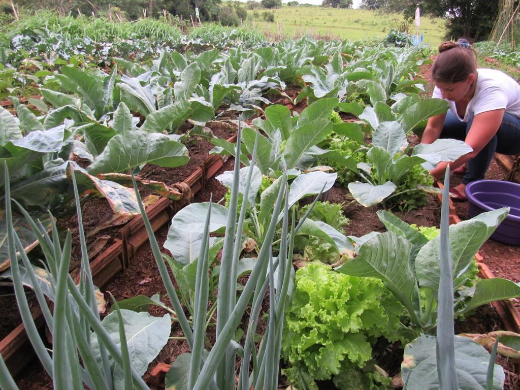 Horta Orgânica da Maíra Alfaro (2) (Copy)