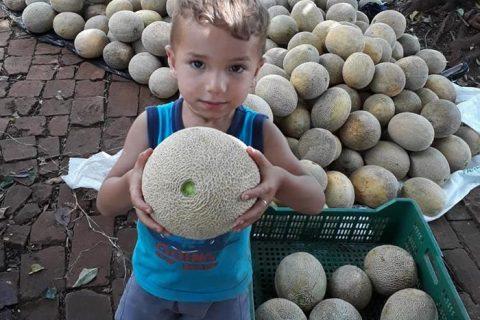 Melões da ilha grande (5) (Copy)