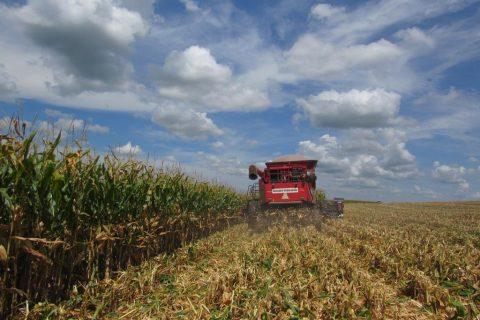 Colheita de milho em área irrigada em Santo Ângelo - Marcos Demeneghi