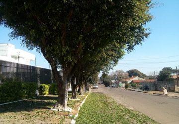 Ficus-queda-das-folhas-3-Copy-360x250.jpg