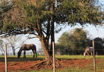 Série-Animais-Cavalos-2-Copy-360x250.jpg