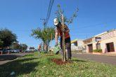 Plantio de árvores (4) (Copy)
