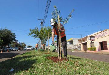Plantio-de-árvores-4-Copy-360x250.jpg