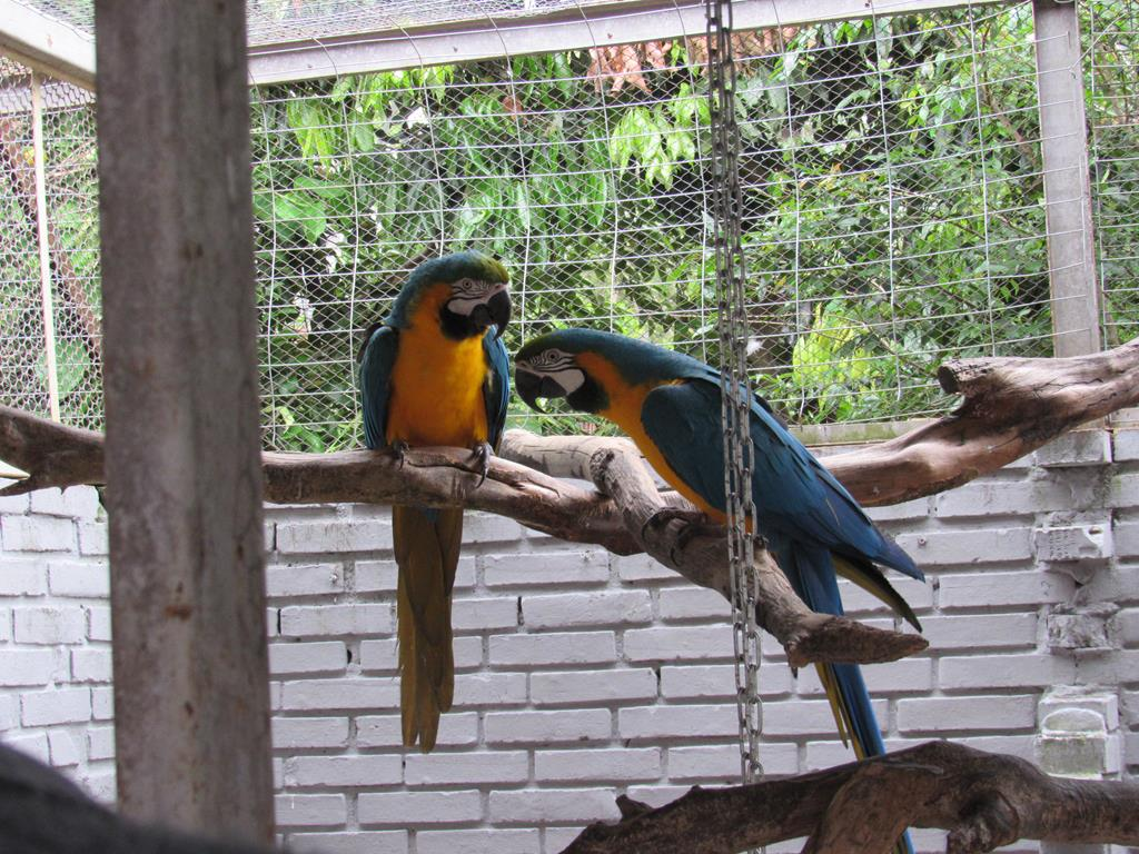 Aves Silvestres (1) (Copy)