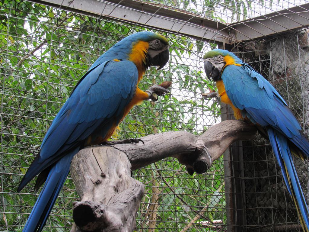 Aves Silvestres (12) (Copy)
