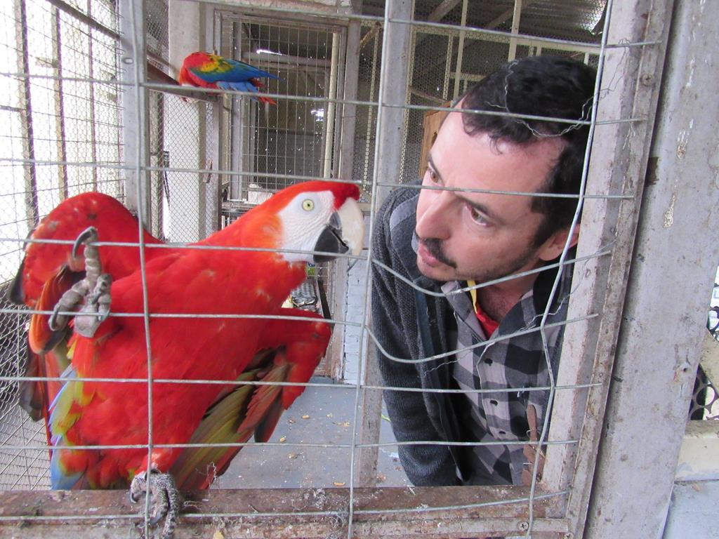 Aves Silvestres (15) (Copy)