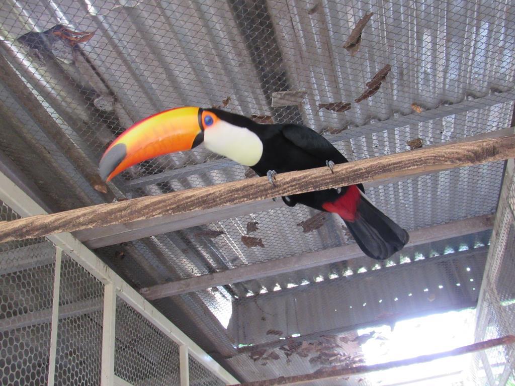 Aves Silvestres (16) (Copy)