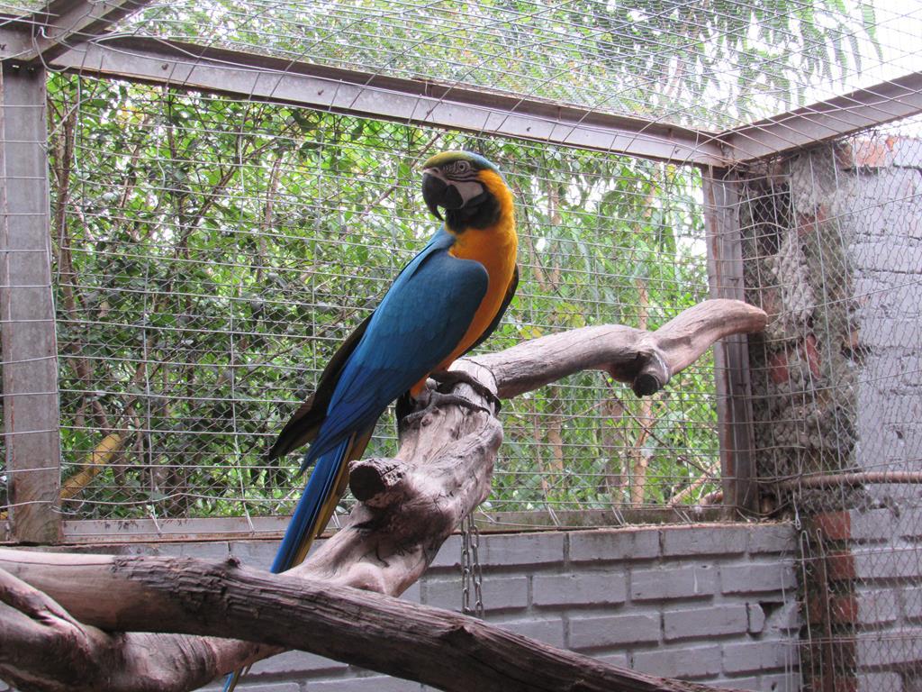Aves Silvestres (2) (Copy)
