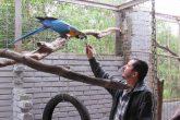Aves Silvestres (4) (Copy)