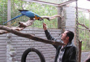 Aves-Silvestres-4-Copy-360x250.jpg
