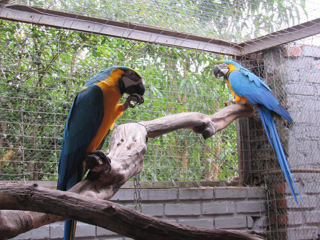 Aves Silvestres (9) (Copy)