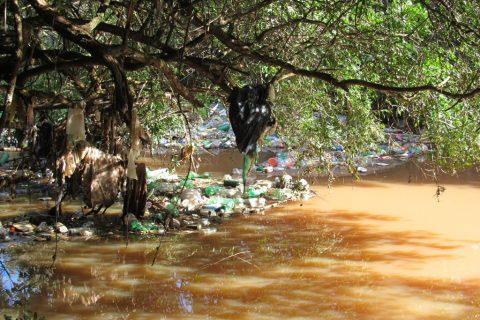 Rio São João no final dos bairros Ditz e Aurora - Foto - Marcos Demeneghi