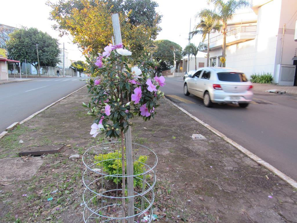 Arborização Urbana (5) (Copy)