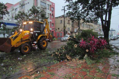Árvore tomba na rua XV de Novembro entre a Sete e a Antônio Manoel