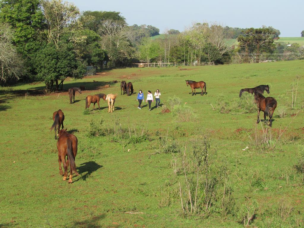Na área arrendada se recuperam 15 cavalos - Foto: Marcos Demeneghi