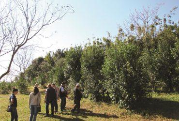 Cultivo-de-Erva-Mate-3-Copy-370x250.jpg