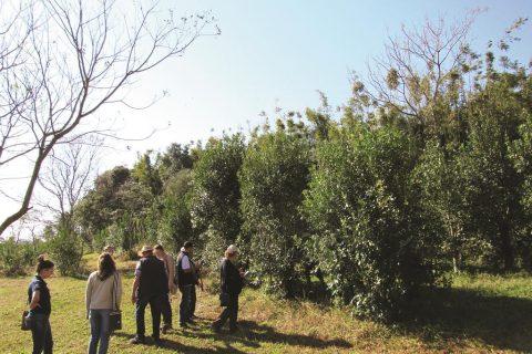 Herval localizado na área experimental do IF Farroupilha, campus de Santo Ângelo - Foto: Marcos Demeneghi