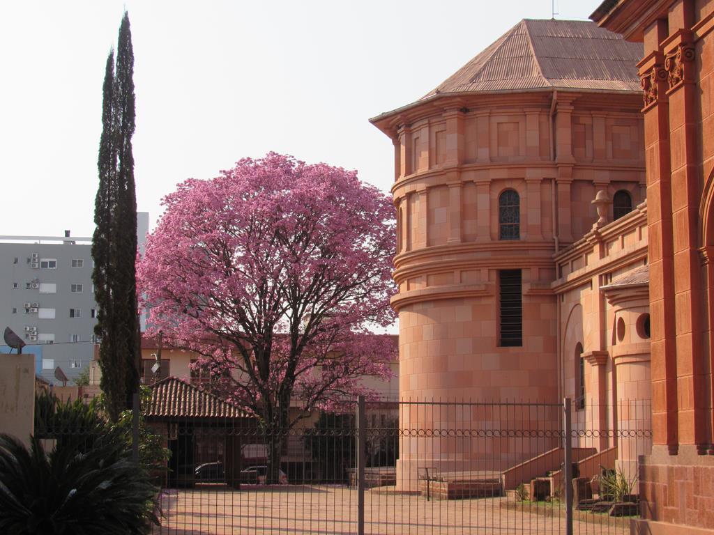 Ipê Roxo na Travessa Augusto Nascimento e Silva, junto a Catedral Angelopolitana Foto: Marcos Demeneghi