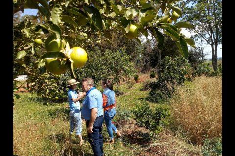 Pomar no Distrito do Sossego (2) (Copy)