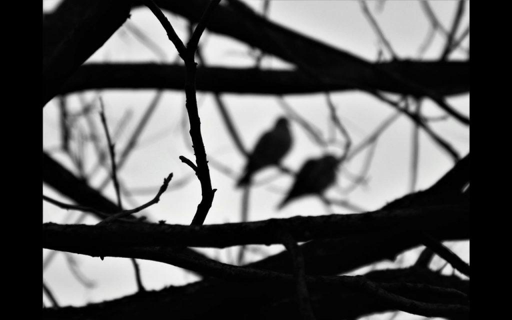 """Foto: Ariane Rebelato - """"Solidão a dois"""""""