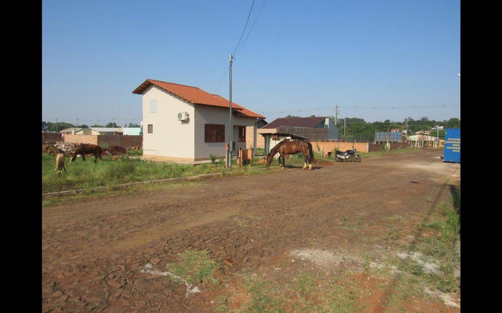 Cavalos na zona norte (5) (Copy)