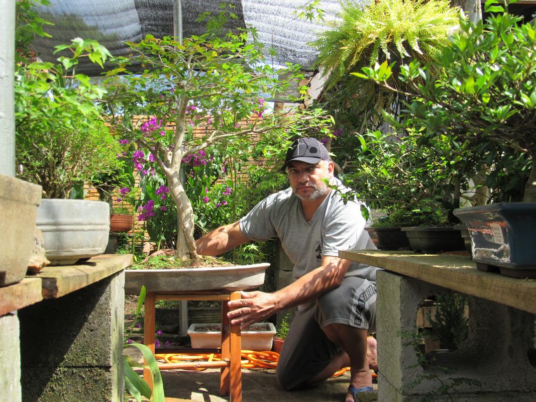 Pitangueira plantada por Pedro Garcia desde a semente. Este bonsai pedro disse que não está a venda Foto: Marcos Demeneghi