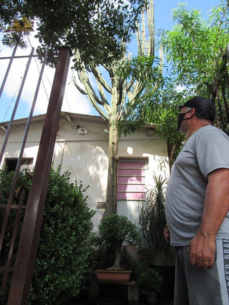 Cacto que cresceu em frente a porta da casa de Pedro - Foto: Marcos Demeneghi